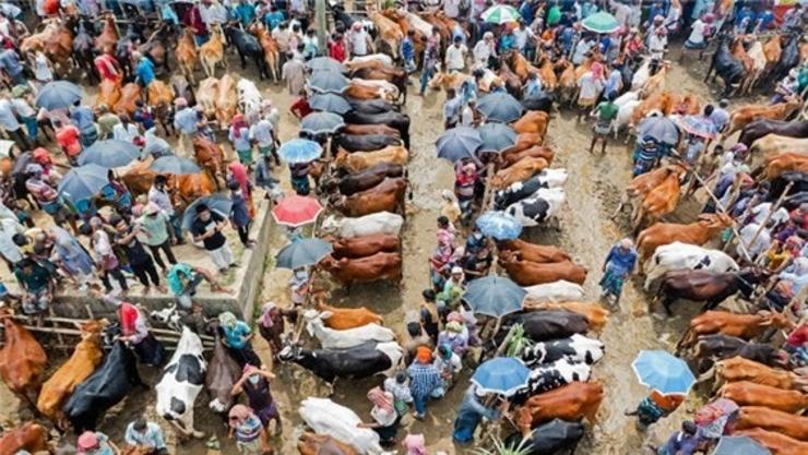 가축의 치명적 대가, 세균이 준 사악한 선물